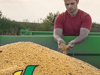 farmer inspecting seed in wagon